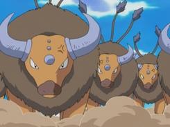 Tauros de Ash