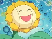 EP137 Sunflora (3).png
