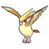 Pidgeot