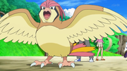 EP843 Pidgeotto.png