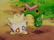 EP163 Togepi con un Caterpie.png